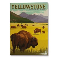 Yellowstone Bison Herd Magnet