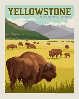 Yellowstone Bison Herd 8X10 Print
