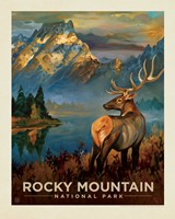 "CO027PT - Rocky Mountain NP Buck 8"" x 10"" Print"